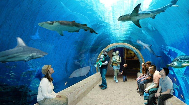 People enjoy the sharks at Utah's Living Planet Aquarium.