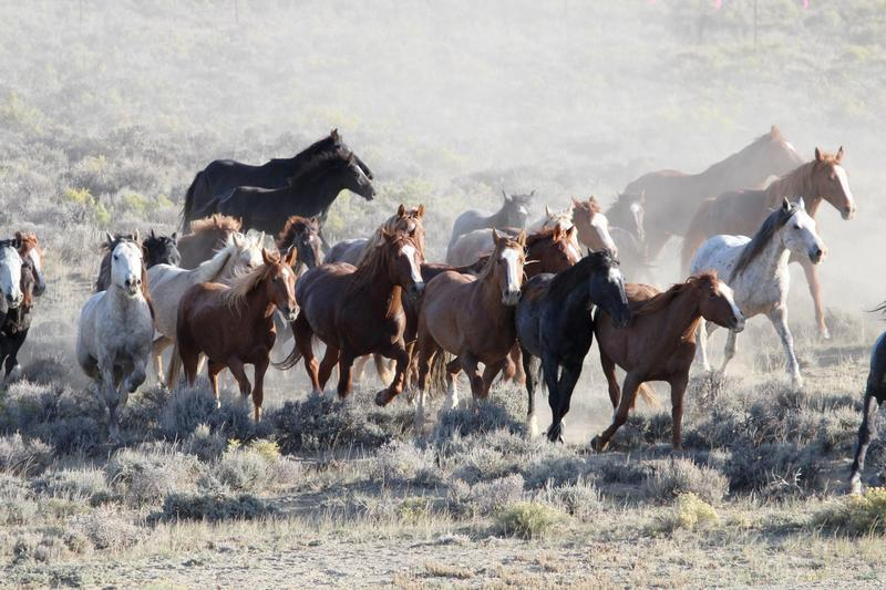 The best way to prevent West Nile in horses is to vaccinate in about April or May. If you haven't yet, it's not too late.