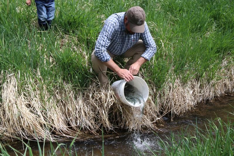 Range Creek Cutthroat Trout Restoration; Trout Unlimited and the Utah Division of Wildlife Resources reintroduce native trout to Emery County