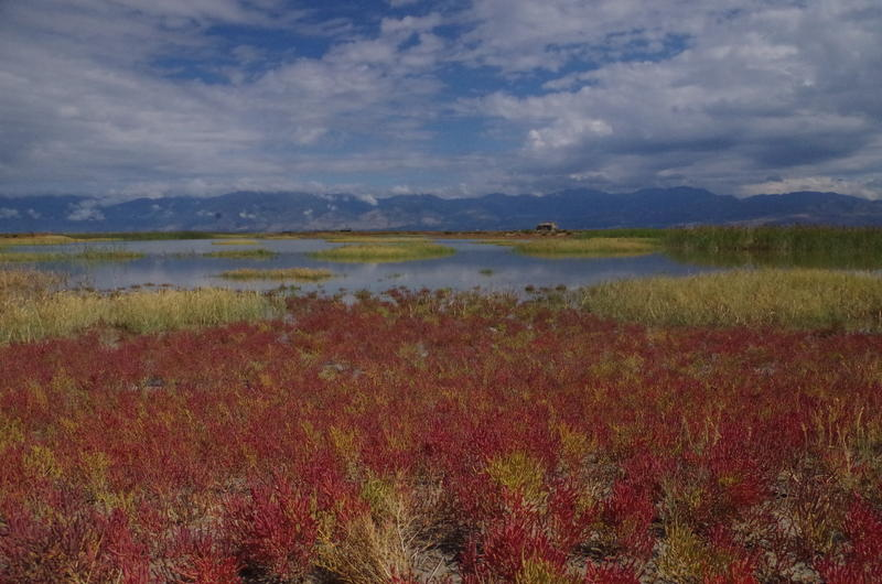 Guidebook to Bear River Bird Refuge Plants Available