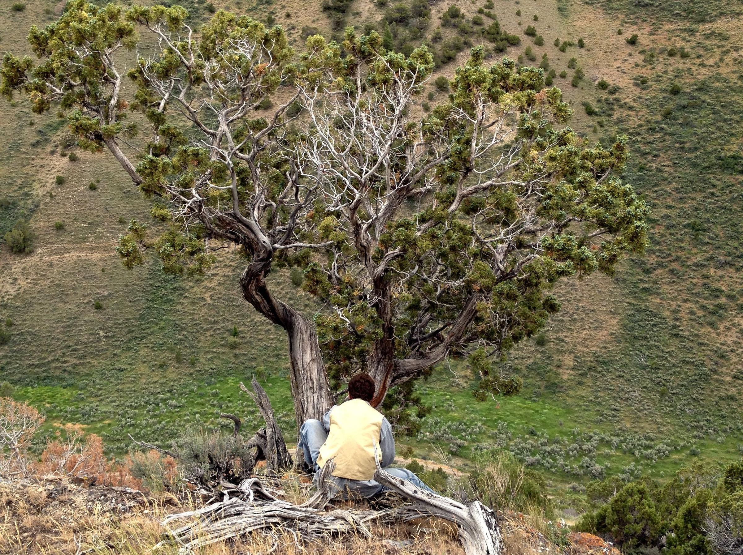 When Trees Talk Researchers Listen Upr Utah Public Radio