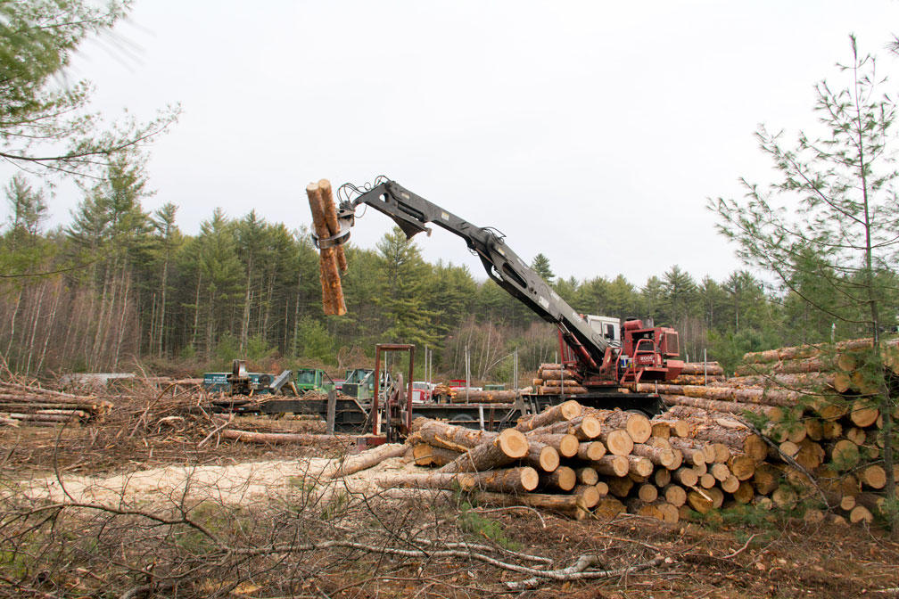 36 Month Timber Harvest Operation Begins At Beaver Mountain UPR