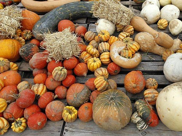 Gourds and pumpkins are part of fall's garden bounty.