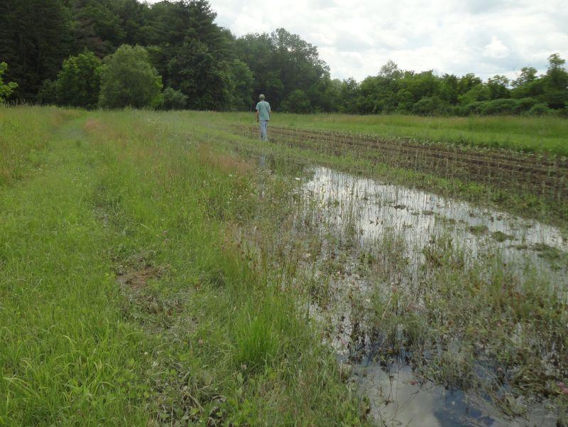 Rainwater has nowhere to go in one of Klein's already saturated fields