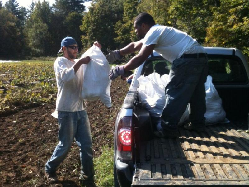 Inmates load bags of gleaned winter squash into Salvation Farms' truck.
