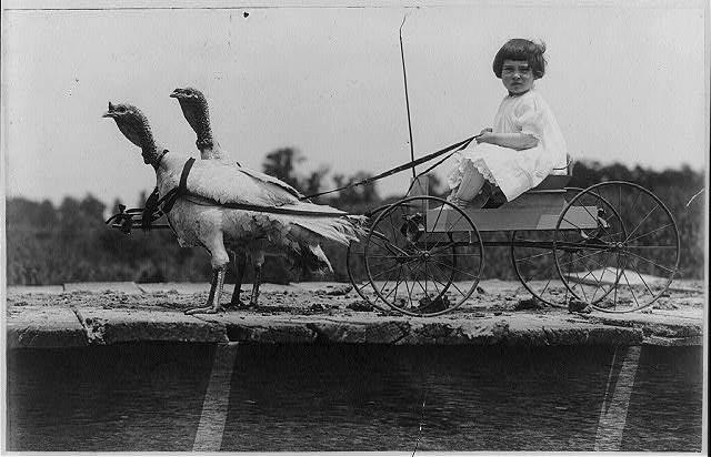 During traditional turkey drives to Boston, children of Vermont farmers typically walked with the turkeys, scattering food to lure them forward -- but perhaps they would have appreciated wagon rides.