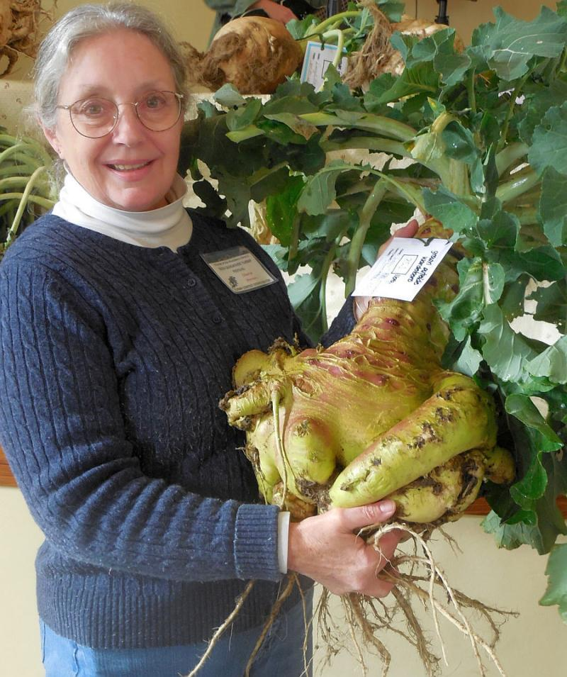 Wardsboro's Gilfeather Turnip Festival features competitions for the ugliest turnip, as well as the biggest -- 25 pounds this year.