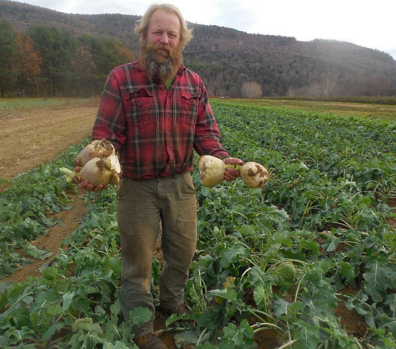 Dummerston farmer Paul Dutton shows off his harvest in his turnip field.