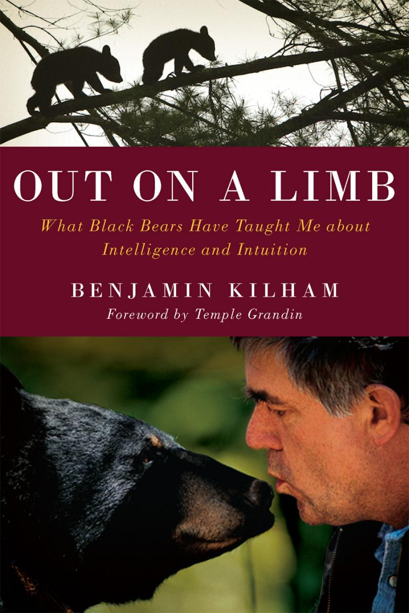 "Kilham's new book, ""Out on a Limb: What Black Bears Have Taught Me About Intelligence and Intiution"""