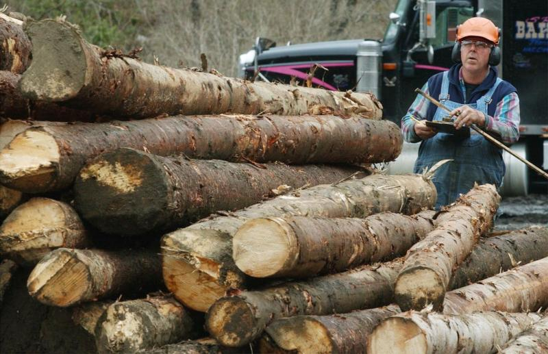In this 2004 photo, Mike Davis scales logs at a transfer yard in Hardwick.