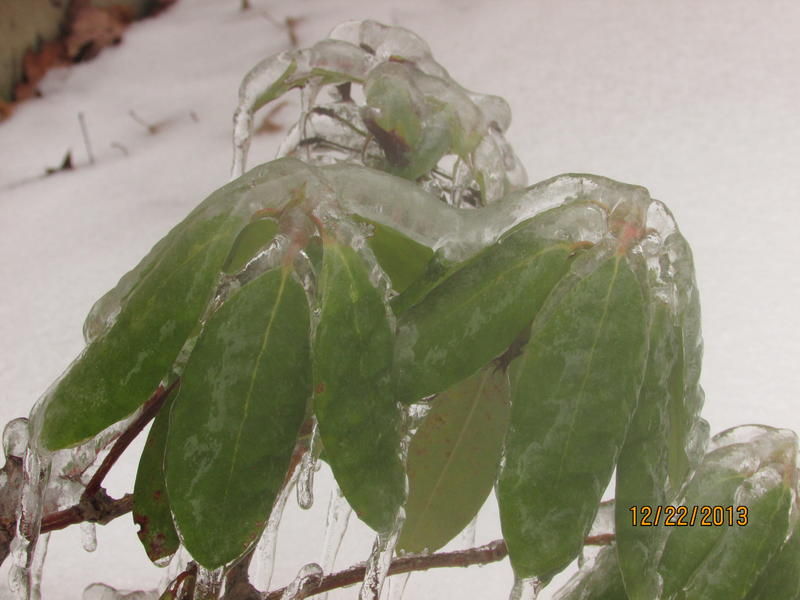 More ice-encasing in Jericho.