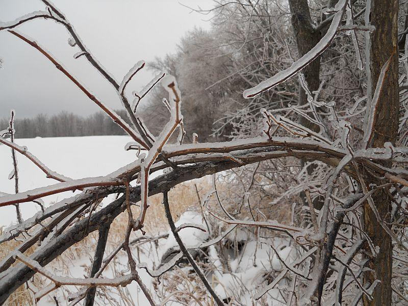 As several Vermont utility companies predicted, most outages were caused by icy trees coming down on power lines across northern Vermont.