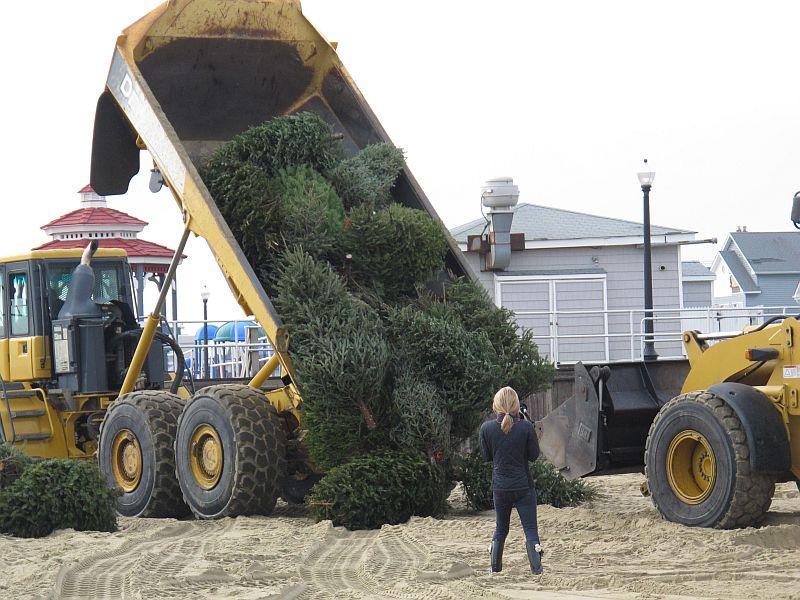 Christmas Tree Williston Vermont