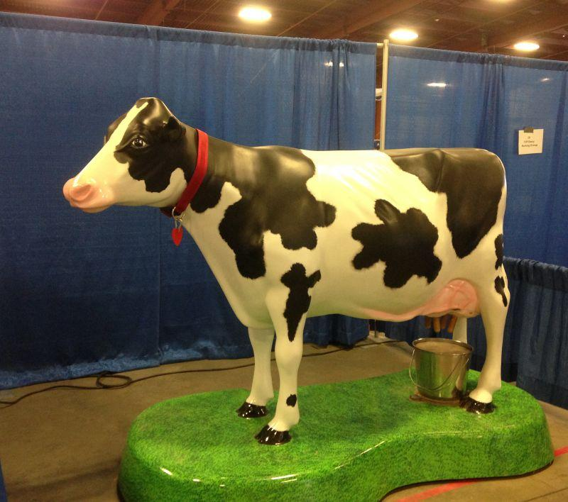 This Holstein doesn't seem to be mooo-ving much.