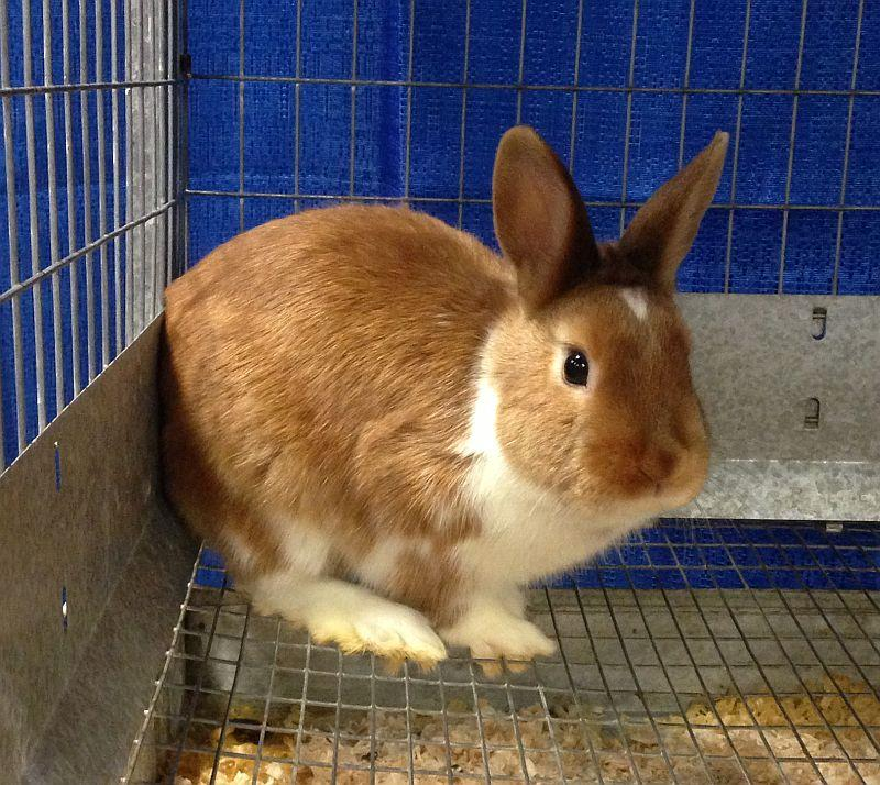 Only a few animals are on exhibit at the annual trade show for farmers, including this rabbit.