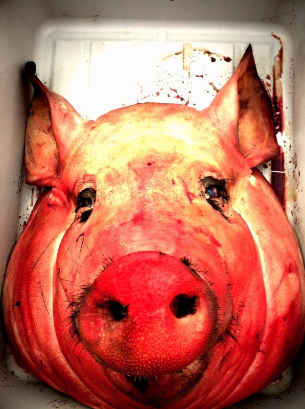 If you're very brave, you can make headcheese out of parts of the pig's head.