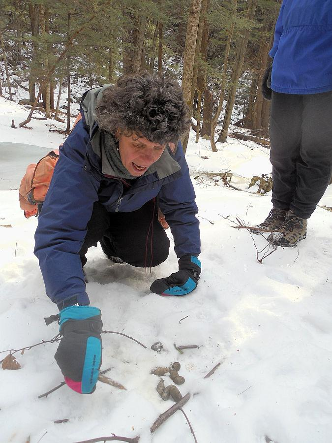 Tracking expert Lynn Levine checks out some coyote scat.