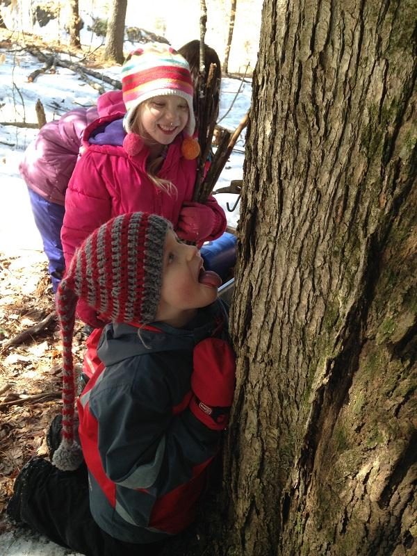 "Sawyer Kissell tastes sap from maple tree as Jayden Foster looks on during ""Forest Friday"" at Ottauquechee School in Quechee."