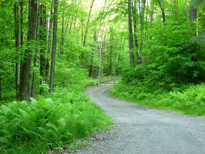 The law allowing for Vermont's municipal forests was passed 100 years ago, in 1915.
