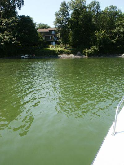 An algal bloom in St. Albans Bay a few years ago.