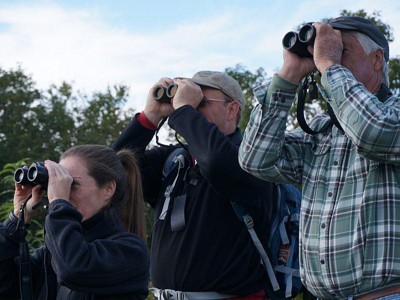 Sara Zahendra, Kent McFarland and Don Clark set their sights on raptors migrating over Plymouth Mountain.