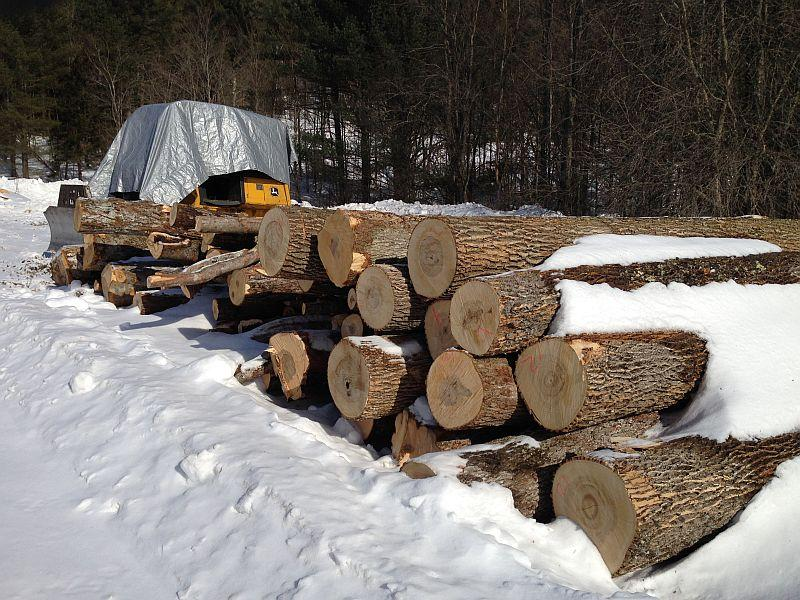With a forest management plan, owners can identify what timber is appropraite to harvest.