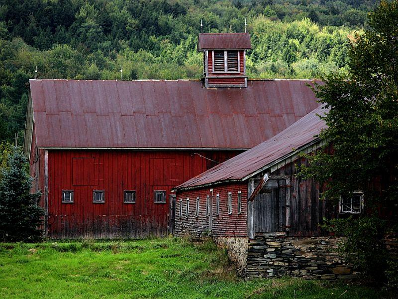 These two dairy barns are located near Westford.