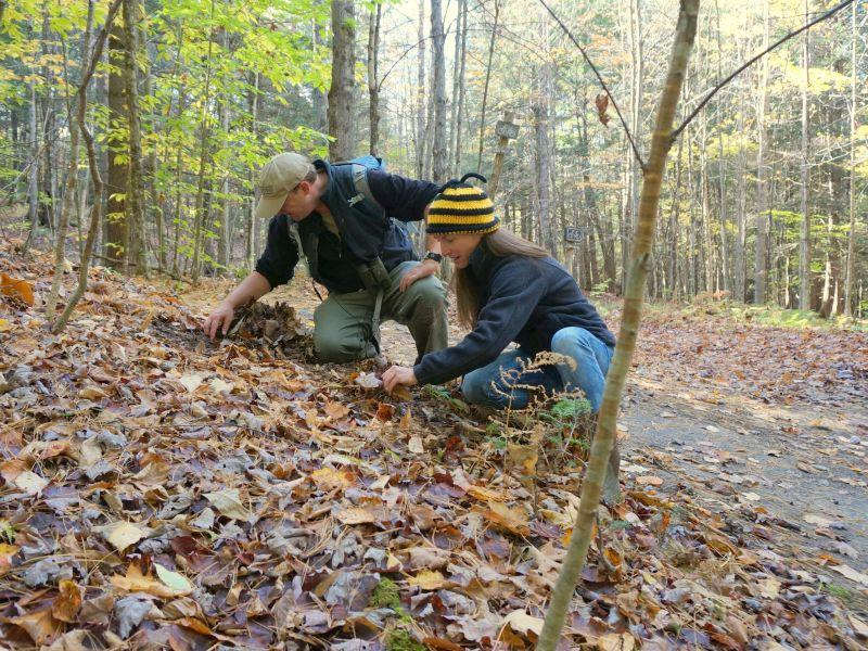 Kent McFarland and Sara Zahendra looking for signs of chipmunks at the Northbranch Nature Center.