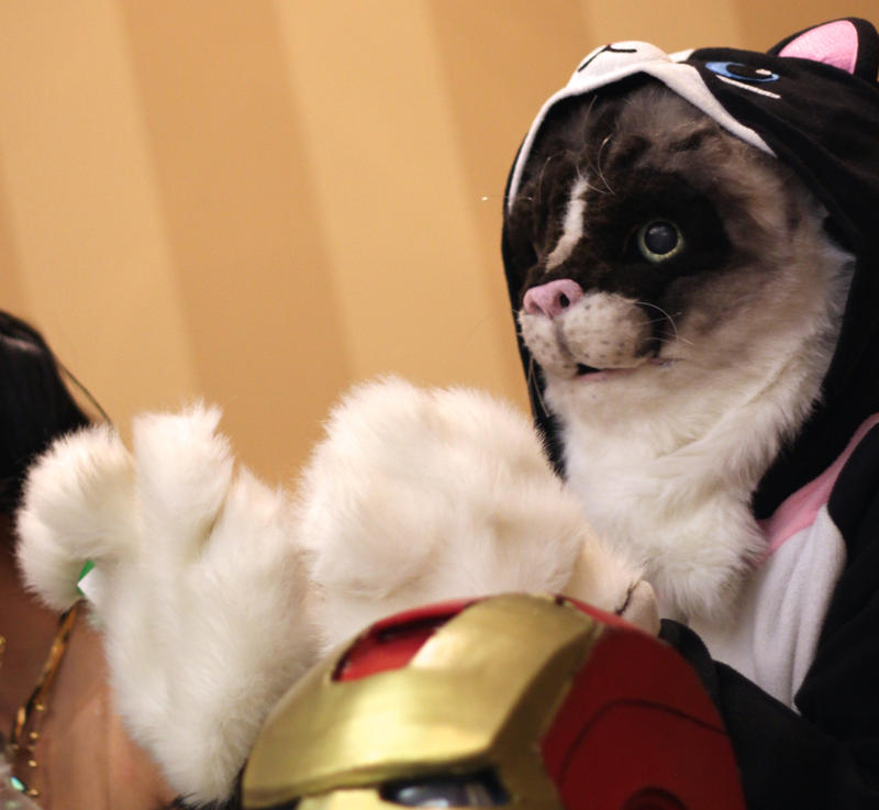 One of the costume contests' more pessimistic judges was Internet sensation Grumpycat.