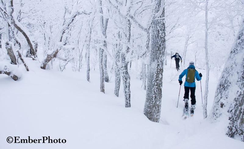 Backcountry skiers head into the woods.