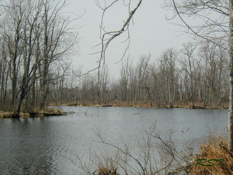 Black Creek, a tributary of the Missisquoi Bay, will continue to run through farmland that is not subject to mandatory best management practices, per a decision announced by the Vermont Agency of Agriculture on Monday.