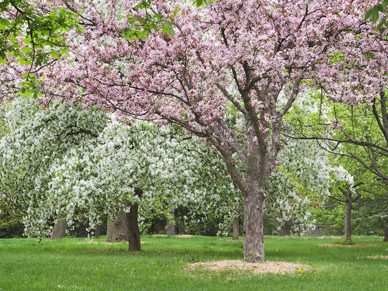 Vermont celebrates Arbor Day Friday, May 6.