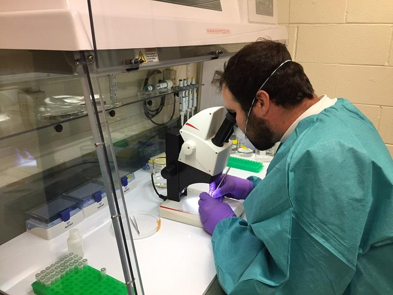 Charlie Delany, a student at Lyndon State College, dissects a tick as part of a research project funded through the Vermont Genetics Network. The aim is to see a whole range of diseases ticks might be bringing into Vermont on their northward migration.