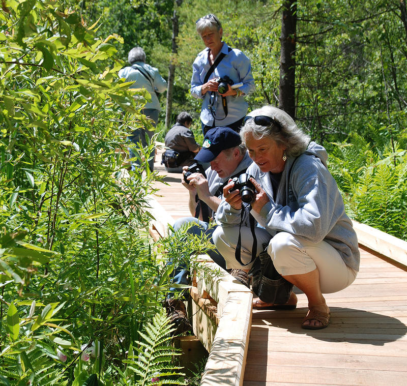 Visitors to the new Eshqua Bog boardwalk photograph the wetland's unusual plants, such as the lady's slipper.