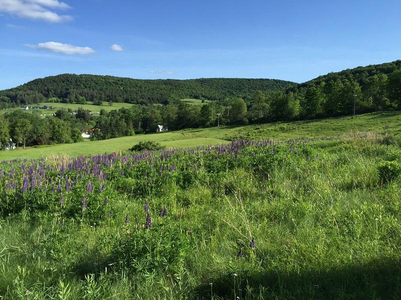 This 15-acre parcel in Taftsville will not be used for a solar project, as proposed by a Massachusetts developer.