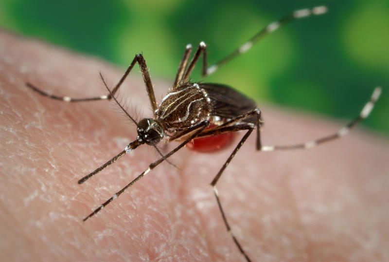 Pittsford has implemented a mosquito surveillance program to test for mosquitoes carrying West Nile virus and Eastern equine encephalitis. The town hopes to gather evidence to justify a larvacide spraying program next summer.