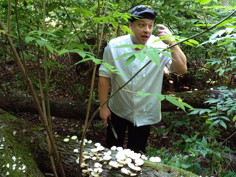 Nick LaDuke, catering chef at the Inn at Shelburne Farms, prepares to gather edible oyster mushrooms growing on a downed tree, during a mushroom-teaching session in a woodland near the Inn.