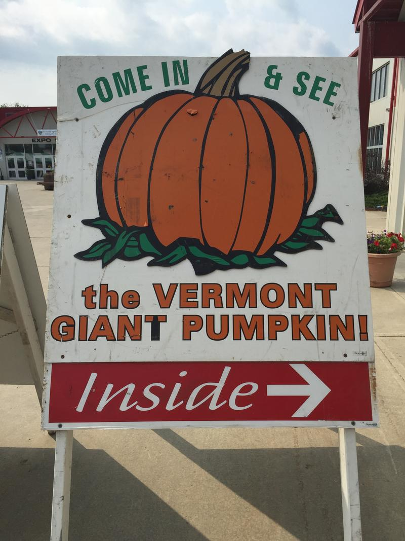 This year's giant pumpkin weighed in at a whopping 1127 lbs.