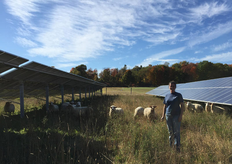 Anna Freund and her husband Ben run Open View Farm on leased land in New Haven. The 2.49-megawatt solar array only takes up a portion of the 180-acre property, but there's a limit to the type of farming that can happen amidst a solar array.