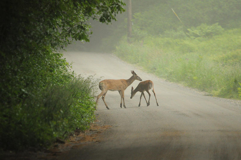 Animal crossings sharing roads with vermont wildlife for Vermont fish and wildlife