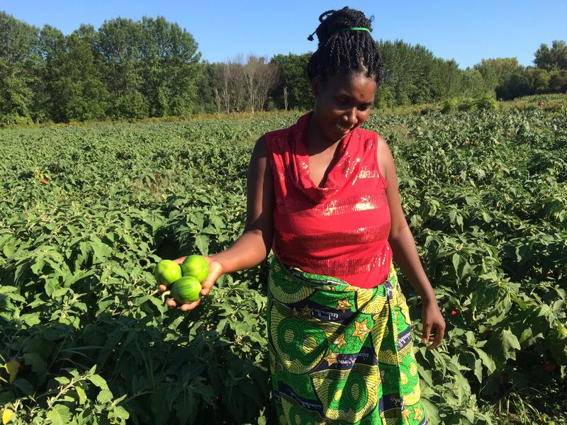 New Farms for New Americans farmer Janine Ndagijimana in front of one of her Ethan Allen Homestead plot of African eggplants.