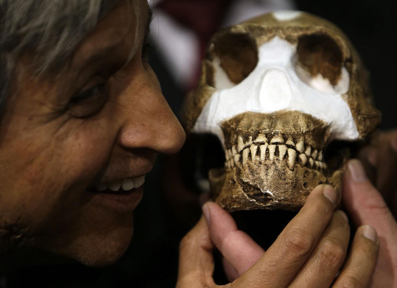 Professor Adam Habib holds a reconstruction of Homo naledi, an early humanoid, in South Africa in September. Lee Berger, the paleontologist whose team discovered these bones, is donating a cast of the specimens to the Montshire Museum.