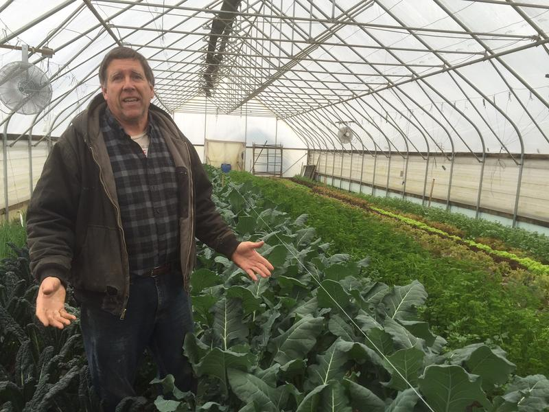Walker Farm co-owner Jack Manix stands among rows of broccoli and kale in one of his greenhouses. A growing interest in local food, and advances in technology and storage techniques, have allowed him to extend his growing season into the winter.v