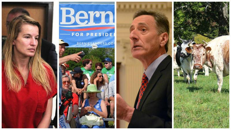 Jody Herring, Sen. Bernie Sanders' presidential campaign kickoff, Gov. Peter Shumlin, heritage Randall cattle.