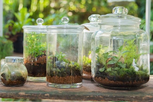 Small Terrariums Make Great Gifts. They Are Easy To Maintain And Can Be A  Fun To Plant With A Friends Or Children.