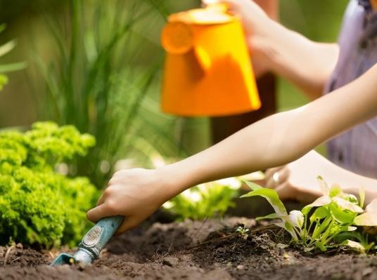 Vermont Garden Journal: Gardening With Kids | Vermont Public Radio