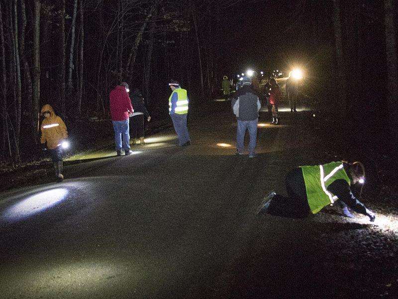 Volunteers spread down the road looking for frogs and salamanders to help across the road.