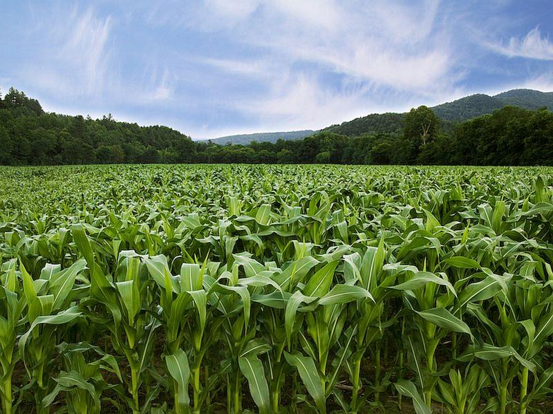 Is no-till agricutlure and cover cropping the answer to protecting Vermont's waterways?