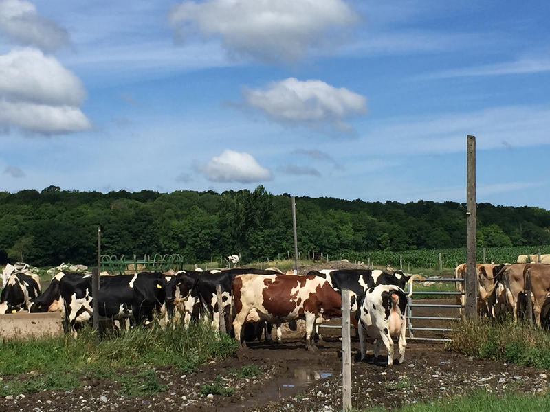 Twenty years ago, the Tudhope farm in Orwell was considered an average-sized farm. Now the 115-cow operation qualifies as a small farm, and will be among the 1,500 small farms the Agency of Agriculture will certify and inspect, if new rules are approved.