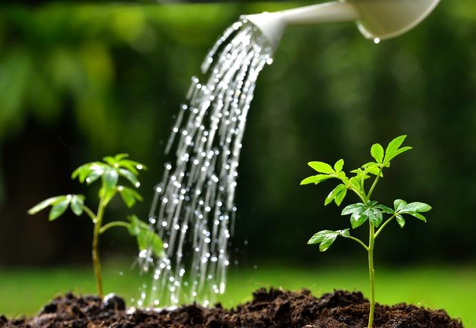 The unpredictability of summer weather means gardeners have to keep an eye on the hydration of their garden. With some effort, keeping your garden watered is no problem.